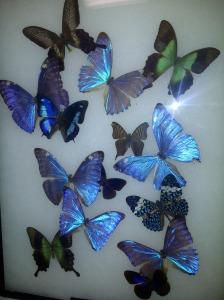 0 many butterflies