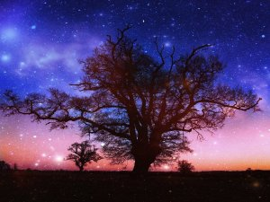 twilight_tree_by_camillavatcher-d4l6zg1