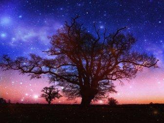 twilight_tree_by_camillavatcher-d4l6zg1